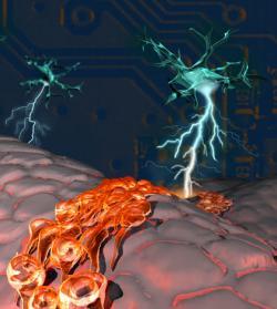Duke Brain Research ChAT+ neuron